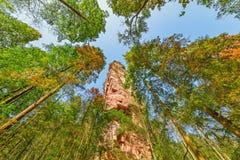 Baumkronen in Zhangjiajie Forest Park Stockbild