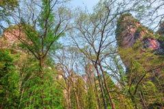 Baumkronen in Zhangjiajie Forest Park Lizenzfreie Stockfotografie