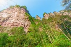 Baumkronen in Zhangjiajie Forest Park Stockfoto