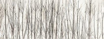 Baumkunst Schwarzweiss Stockbilder