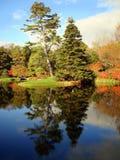 Baumlandschaft über Asticou Azalee-Garten, Maine Stockbild