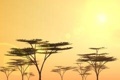 Baumlandschaft Stockbilder