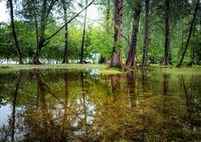 Baumlandschaft im tropischen Regenwald. Schöne Natur Lizenzfreie Stockfotos
