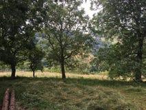 Baumlandschaft am Sommertag Lizenzfreie Stockbilder
