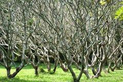Baummuster im Garten. Stockbild