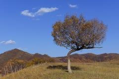 Baummuster im Herbst Lizenzfreies Stockbild