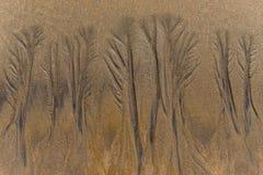 Baummuster im Sand Stockfotos