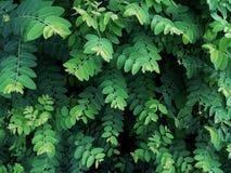 Baummuster und hellgrünes Laub Stockbilder