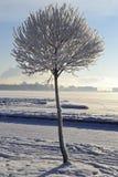 Baumnahaufnahme Lizenzfreies Stockbild