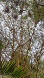 Baumnaturnaturschönheit verwirrte grünen Wald stockbild