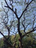 Baumnetz Stockbild