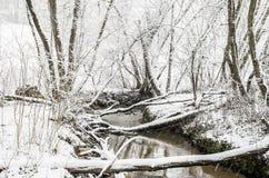 Baumniederlassungen als Brücke Lizenzfreies Stockbild