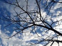 Baumniederlassungen auf Hintergrund des bewölkten blauen Himmels Stockbilder