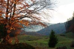 Baumniederlassungen auf Lichtern des Sonnenuntergangs auf Karpatenbergen Stockfotos