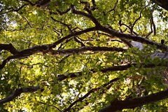 Baumniederlassungen in einem Wald Lizenzfreies Stockbild