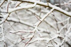 Baumniederlassungen im Schnee Stockbild
