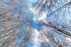 Baumniederlassungen im Wald ohne schönen Himmel der Blätter Stockfotos