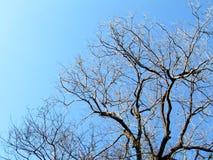 Baumniederlassungen ohne Blätter im Sommer Lizenzfreie Stockfotos