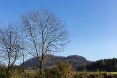 Baumniederlassungen und -beeren auf ihnen am Herbst November Lizenzfreies Stockbild