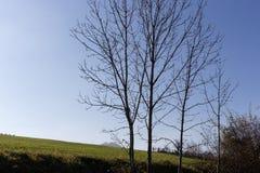 Baumniederlassungen und -beeren auf ihnen am Herbst November Stockbilder