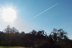 Baumniederlassungen und -beeren auf ihnen am Herbst November Lizenzfreie Stockfotos