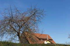 Baumniederlassungen und -beeren auf ihnen am Herbst November Stockbild