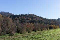 Baumniederlassungen und -beeren auf ihnen am Herbst November Stockfotos