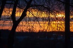 Baumniederlassungen und roter Sonnenuntergang Stockbilder