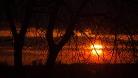 Baumniederlassungen und roter Sonnenuntergang Lizenzfreie Stockfotografie