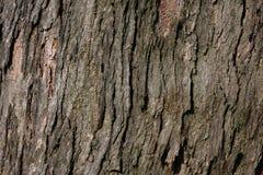 Baumoberfläche lizenzfreies stockfoto