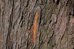 Baumoberfläche stockbild