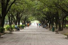 Baumparkkorridor mit den Leuten, die öffentlich gehen und sitzen, setzt entlang dem Gehweg auf die Bank lizenzfreie stockbilder