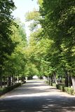 Baumperspektive in Aranjuez-Gärten, Spanien lizenzfreies stockfoto