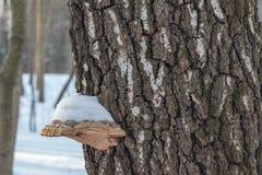 Baumpilz bedeckt mit Schnee Lizenzfreies Stockfoto