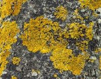 Baumpilzbeschaffenheit in den gelben und blauen Kreisen Lizenzfreie Stockfotografie