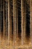Baumplantage, Leben ausgestorben stockbilder