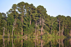 Baumreflexion auf Seewasser stockfotos