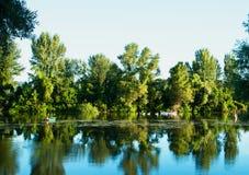 Baumreflexion im Wasser Stockfotos