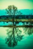 Baumreflexion im Wasser Stockfotografie