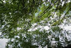Baumreflexion im Wasser Stockbilder