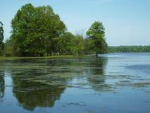Baumreflexion im Wasser Lizenzfreies Stockfoto