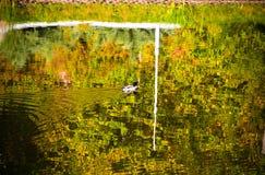 Baumreflexion im Wasser Herbstlaub auf der Oberfläche Lizenzfreies Stockbild