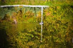 Baumreflexion im Wasser Herbstlaub auf der Oberfläche Stockfotos