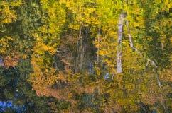 Baumreflexion im Wasser Herbstlaub auf der Oberfläche Stockbilder