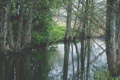 Baumreflexion im Wasser Weinleseblick Lizenzfreie Stockbilder