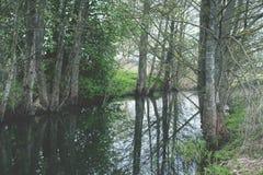 Baumreflexion im Wasser Weinleseblick Stockbild