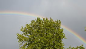 Baumregenbogengrün stockfotografie
