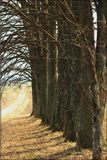 Baumreihe Stockbild