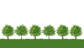 Baumreihe auf üppigem Gras Stockbilder