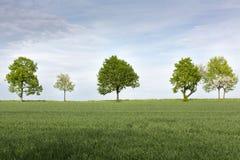 Baumreihe auf Ackerland im Frühjahr Lizenzfreie Stockfotografie